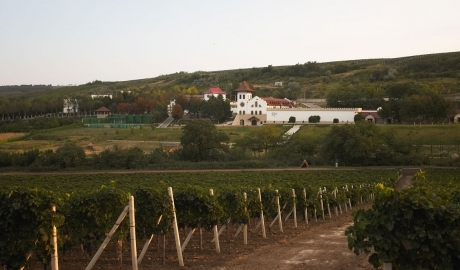 PURCARI WINERY